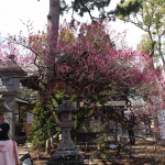Temple trees and monuments Kyoto Japan 2018