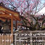 Prayers at a Kyoto temple Japan 2018